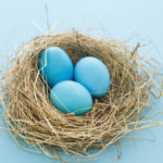 nesting coparenting: three blue eggs in a bird's nest